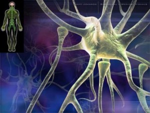 нейрон1